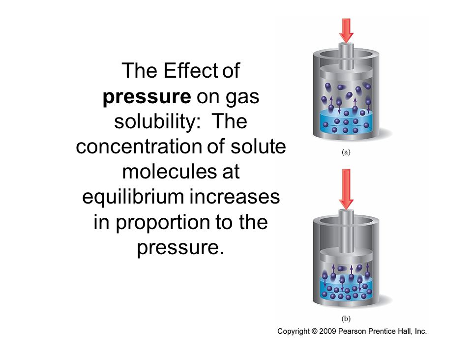 The Effect of pressure on gas solubility: The concentration of solute molecules at equilibrium increases in proportion to the pressure.