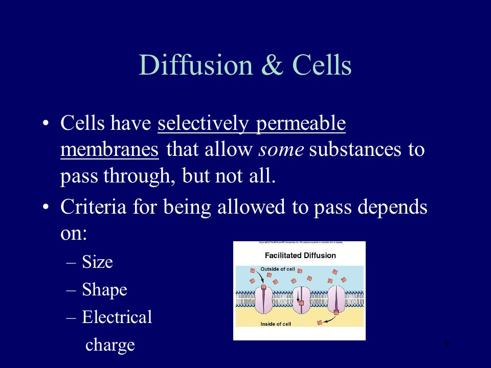 Diffusion & Cells Cells have selectively permeable membranes that allow some substances to pass through, but not all.