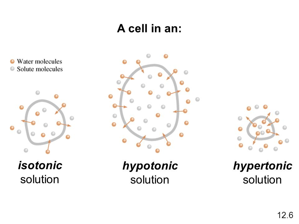 A cell in an: isotonic hypotonic hypertonic