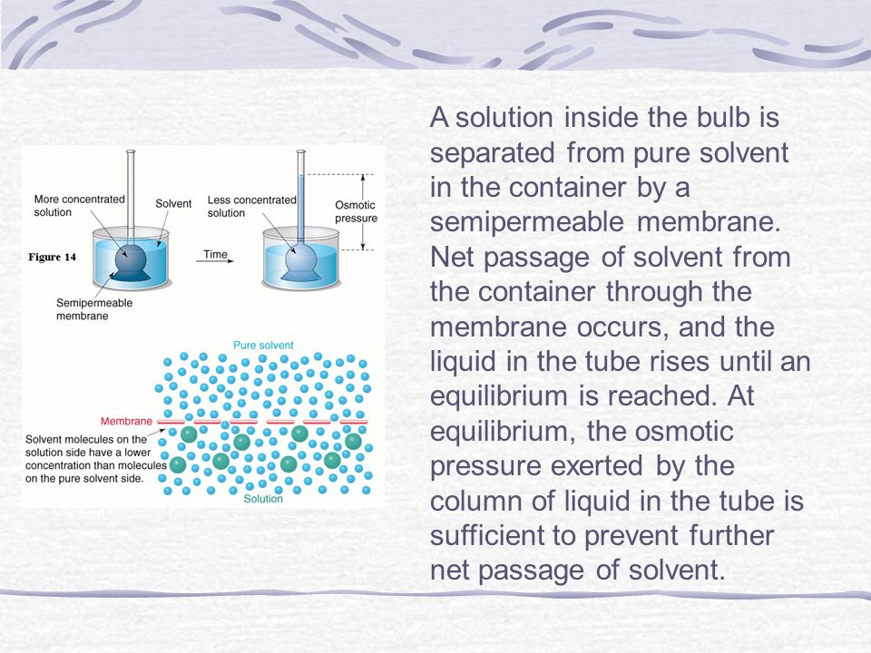 A solution inside the bulb is separated from pure solvent in the container by a semipermeable membrane.