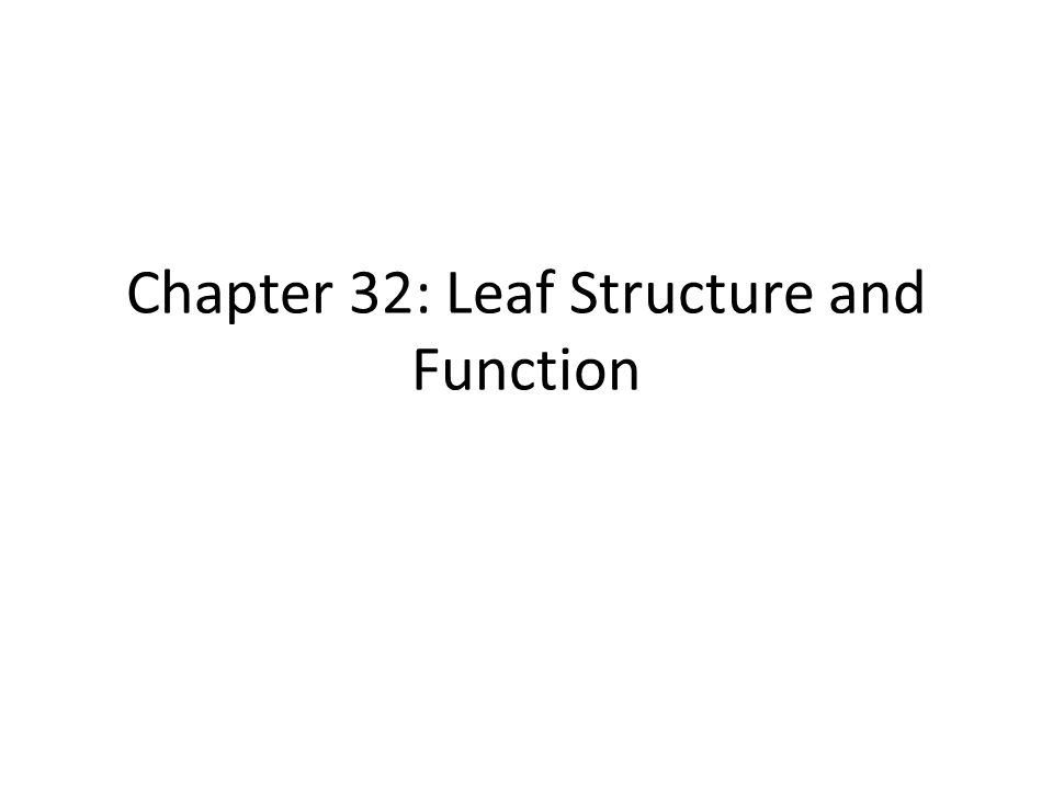 Chapter 32: Leaf Structure and Function