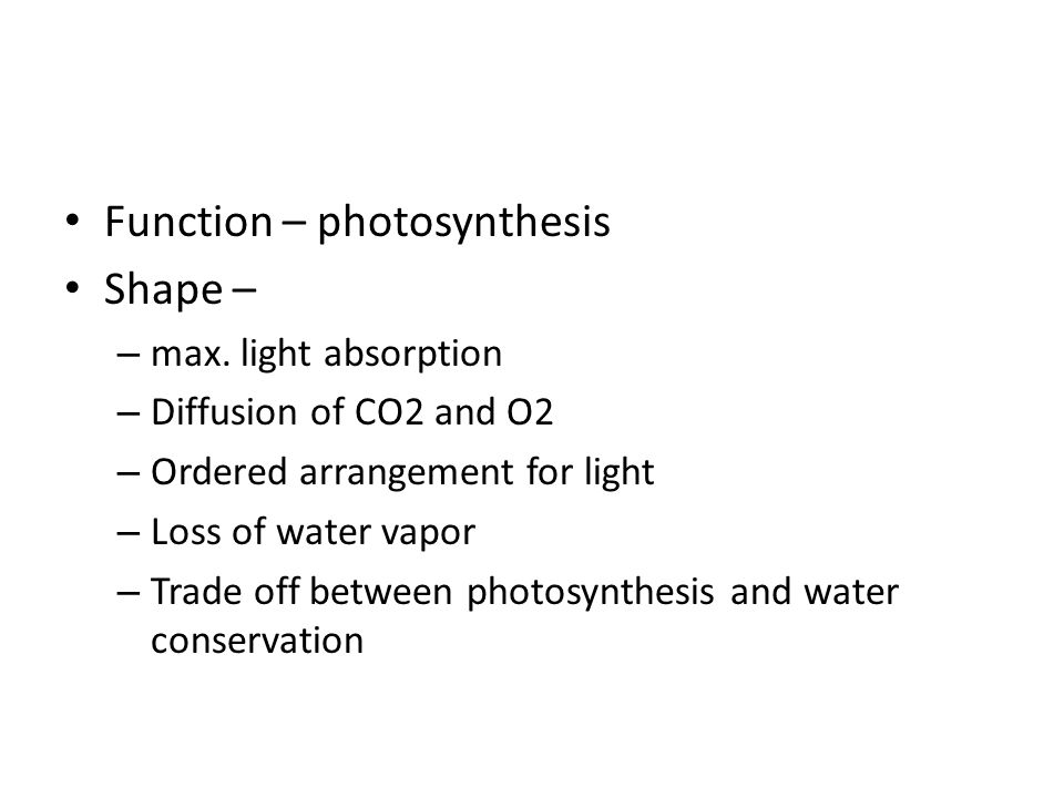 Function – photosynthesis Shape –
