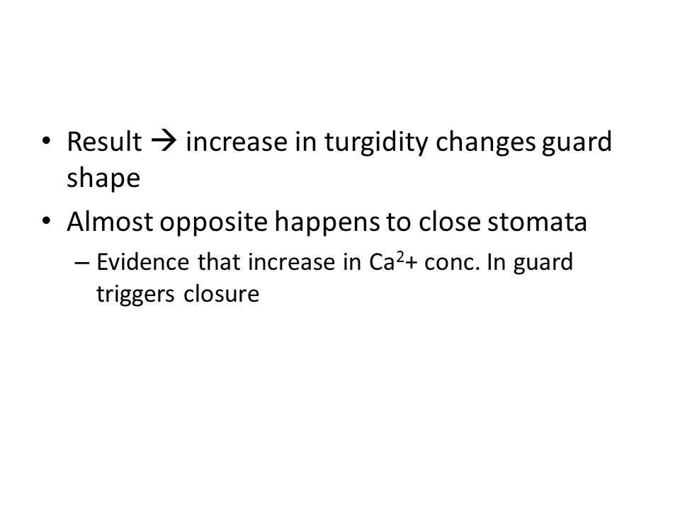 Result  increase in turgidity changes guard shape