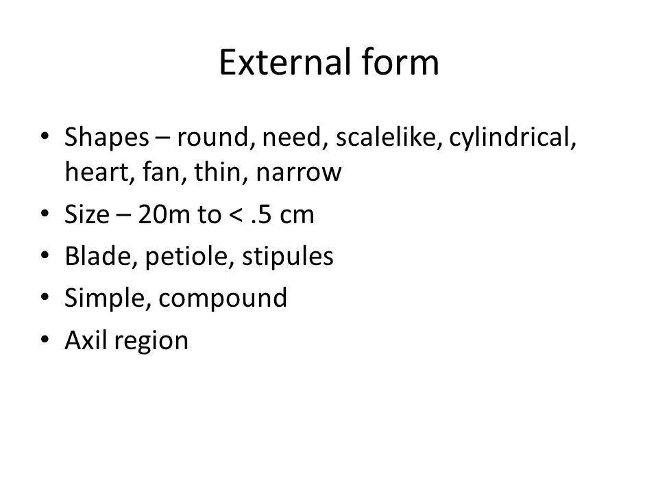 External form Shapes – round, need, scalelike, cylindrical, heart, fan, thin, narrow. Size – 20m to < .5 cm.