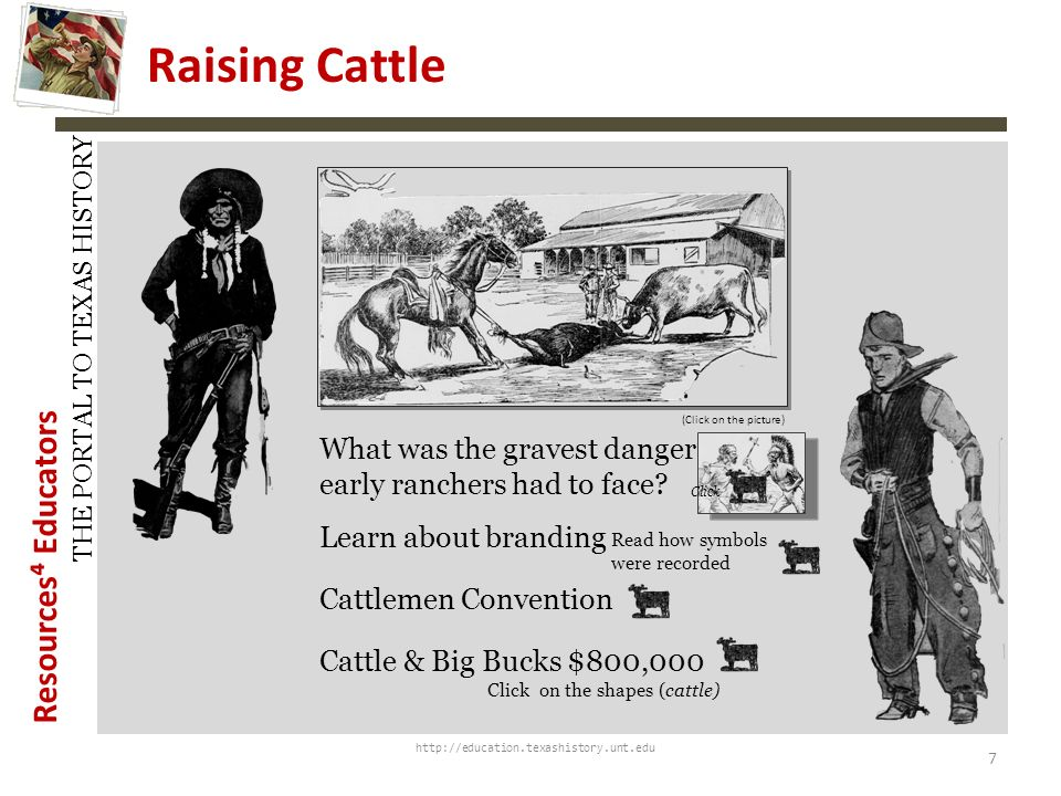 History Snapshots Raising Cattle. (Click on the picture) What was the gravest danger that early ranchers had to face