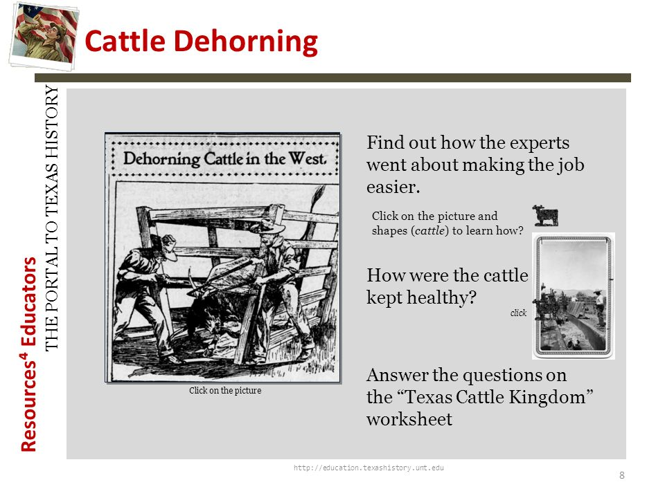 History Snapshots Cattle Dehorning. Find out how the experts went about making the job easier.
