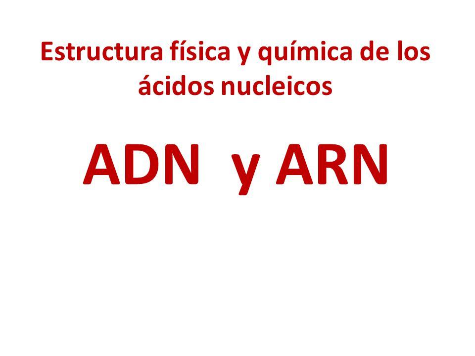 Estructura física y química de los ácidos nucleicos
