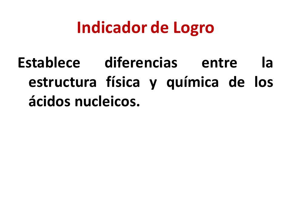 Indicador de Logro Establece diferencias entre la estructura física y química de los ácidos nucleicos.