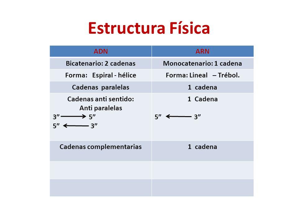 Estructura Física ADN ARN Bicatenario: 2 cadenas