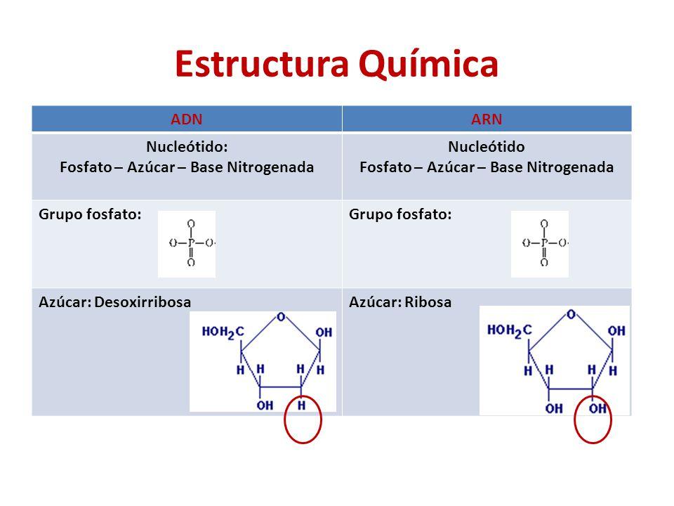Fosfato – Azúcar – Base Nitrogenada