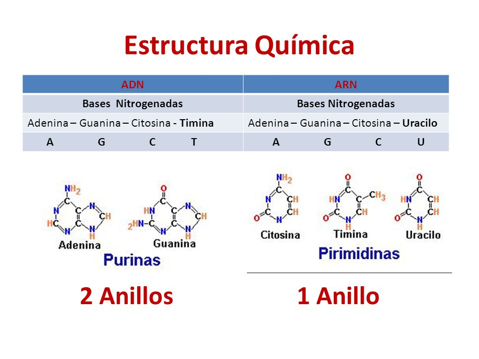 Estructura Química 2 Anillos 1 Anillo ADN ARN Bases Nitrogenadas