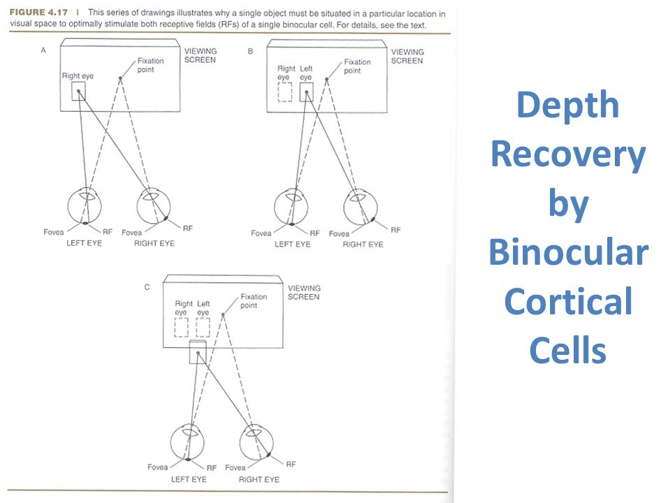 Depth Recovery by Binocular Cortical Cells