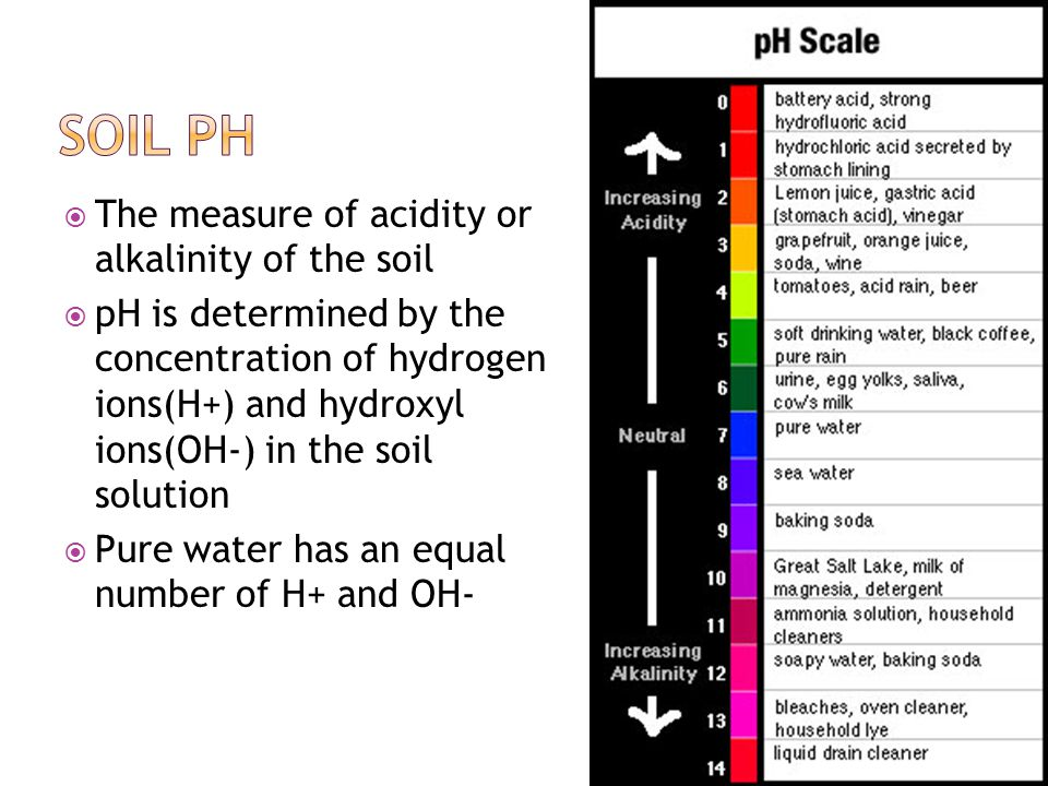 Measuring Soil PH
