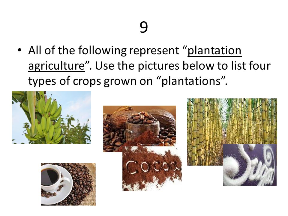 9 All of the following represent plantation agriculture .