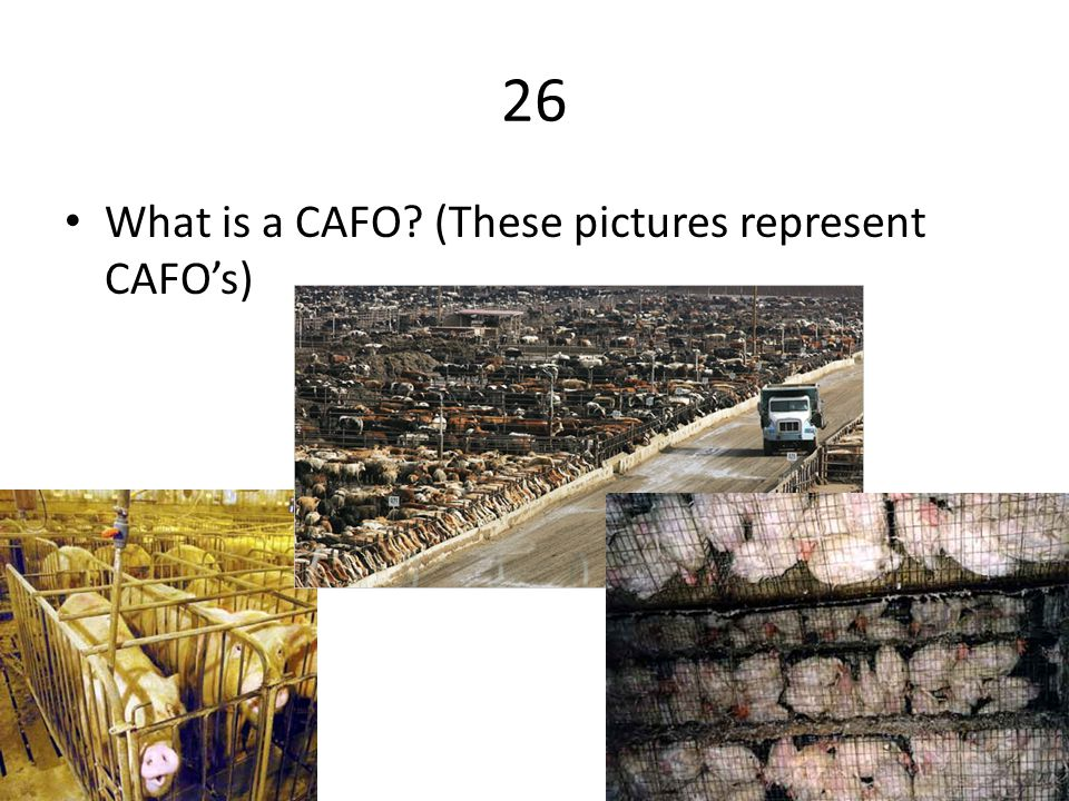 26 What is a CAFO (These pictures represent CAFO's)