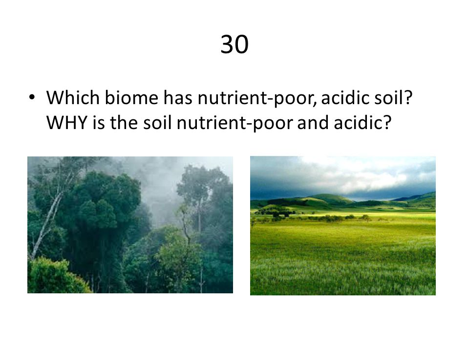 30 Which biome has nutrient-poor, acidic soil WHY is the soil nutrient-poor and acidic