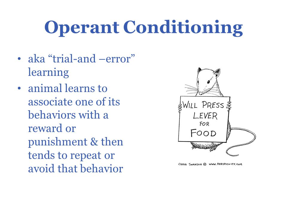 trial and error learning in humans Adaptive coordination of working-memory and reinforcement learning in non- human primates performing a trial-and-error problem solving task.