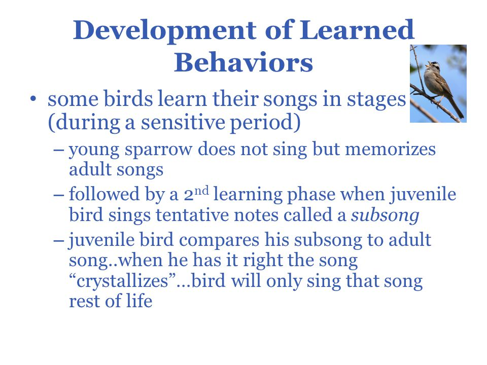 Common Behavior Problems in Parrots and Other Pet Birds