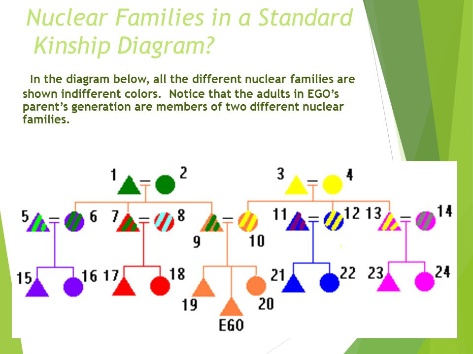 diagram of nuclear family marriage anth 321: kinship and social organization - ppt video online download #6