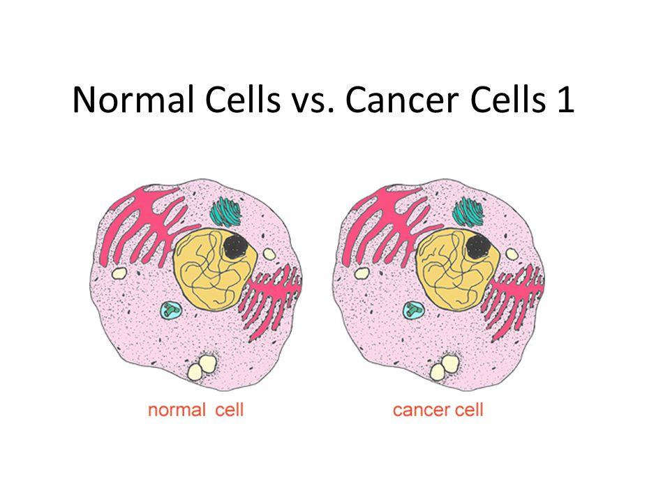 Normal Cells vs  Cancer Cells 1