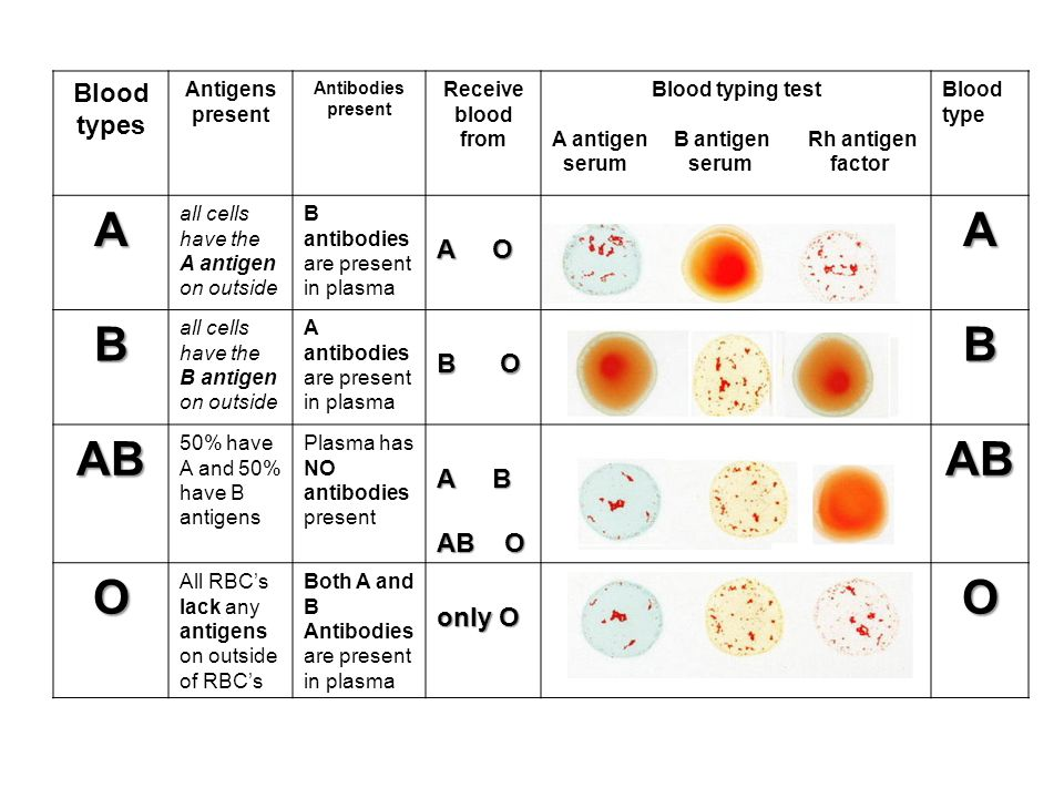 O Antigen The Circulatory...