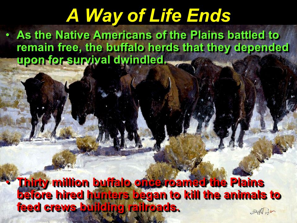 A Way of Life Ends As the Native Americans of the Plains battled to remain free, the buffalo herds that they depended upon for survival dwindled.