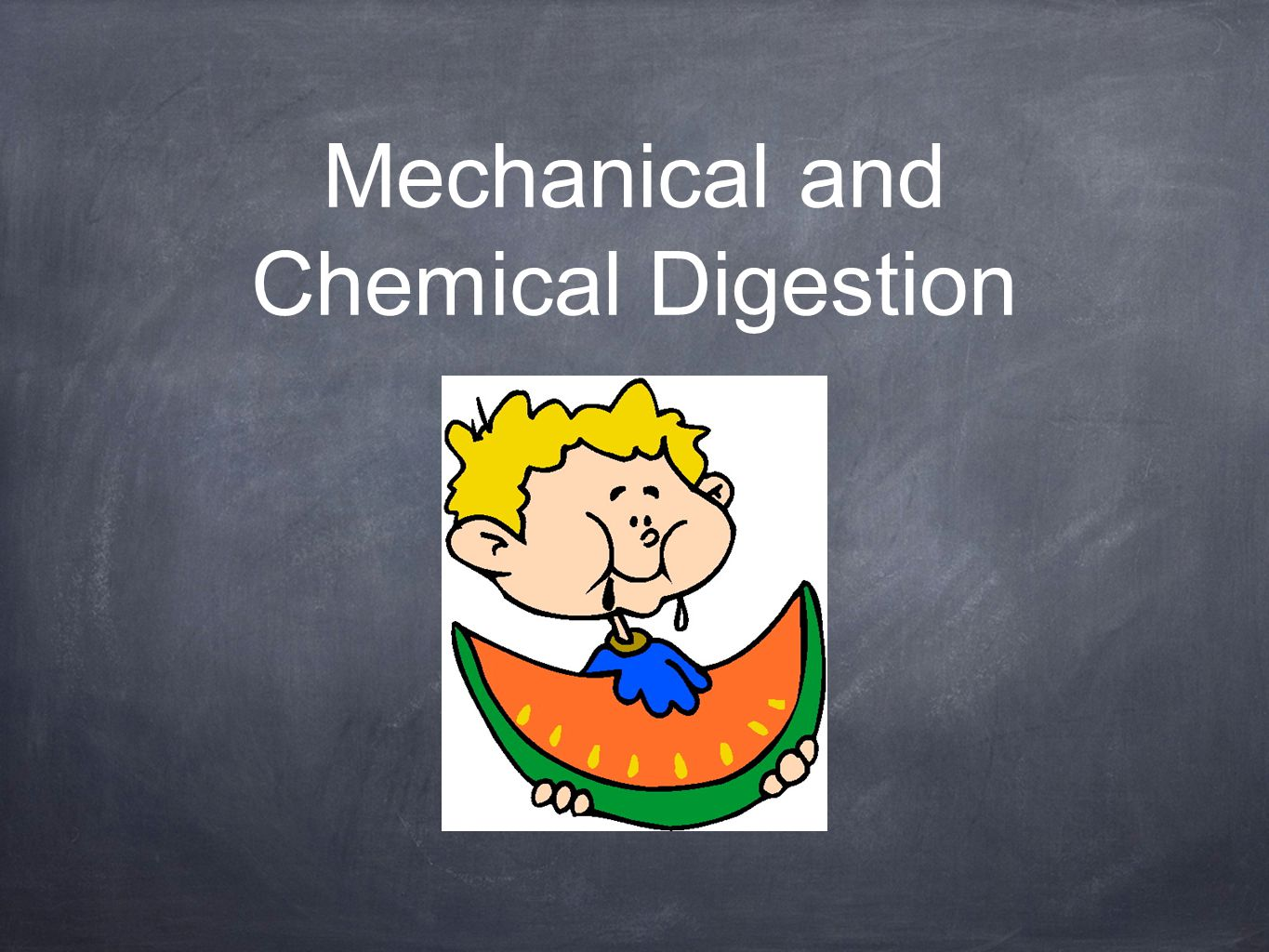 chemical and physical process of digestion lab chart1