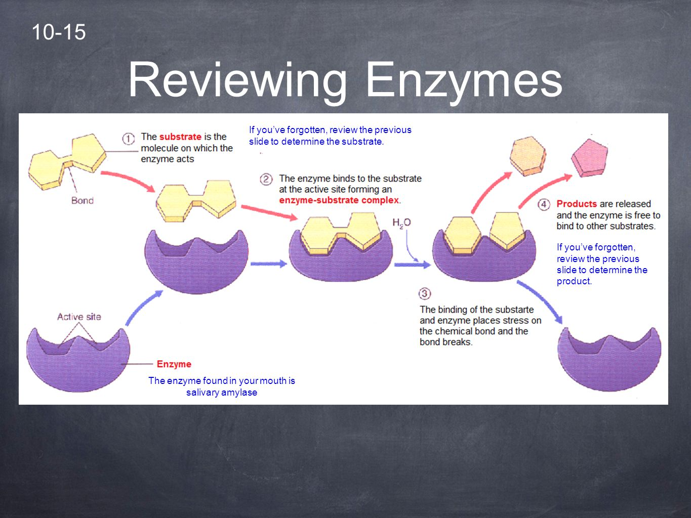 enzymes enzyme and salivary amylase solution Enzymes lab 6 abstract/ objectives a make a dilution series b standardize an enzyme solution using a dilution series c discuss the effect of dilution, heat and ph on the activity of salivary amylase.