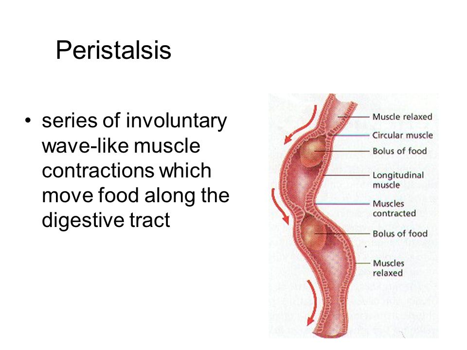 Peristalsis series of involuntary wave-like muscle contractions which move food along the digestive tract.