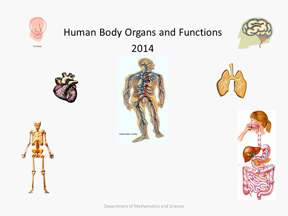 Human Body Organs and Functions ppt video online download