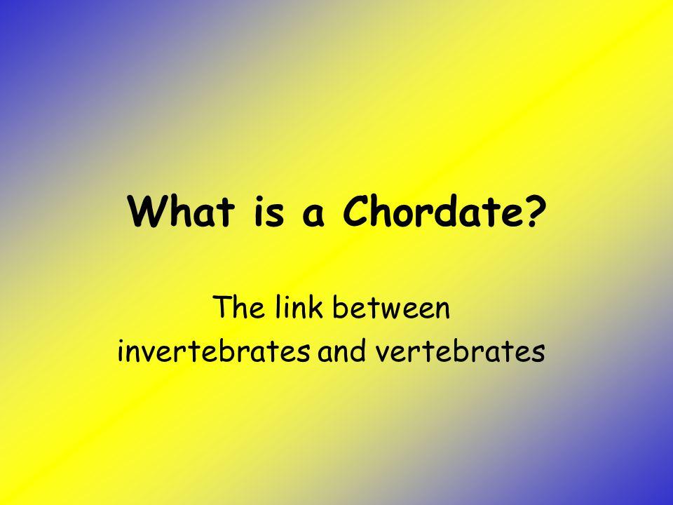 The link between invertebrates and vertebrates