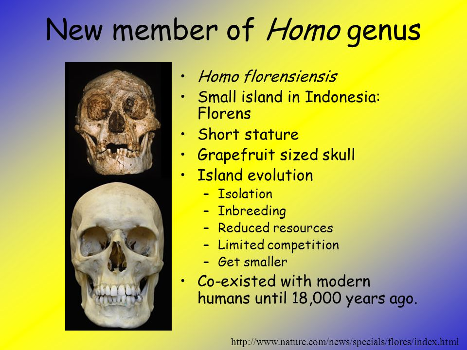 New member of Homo genus