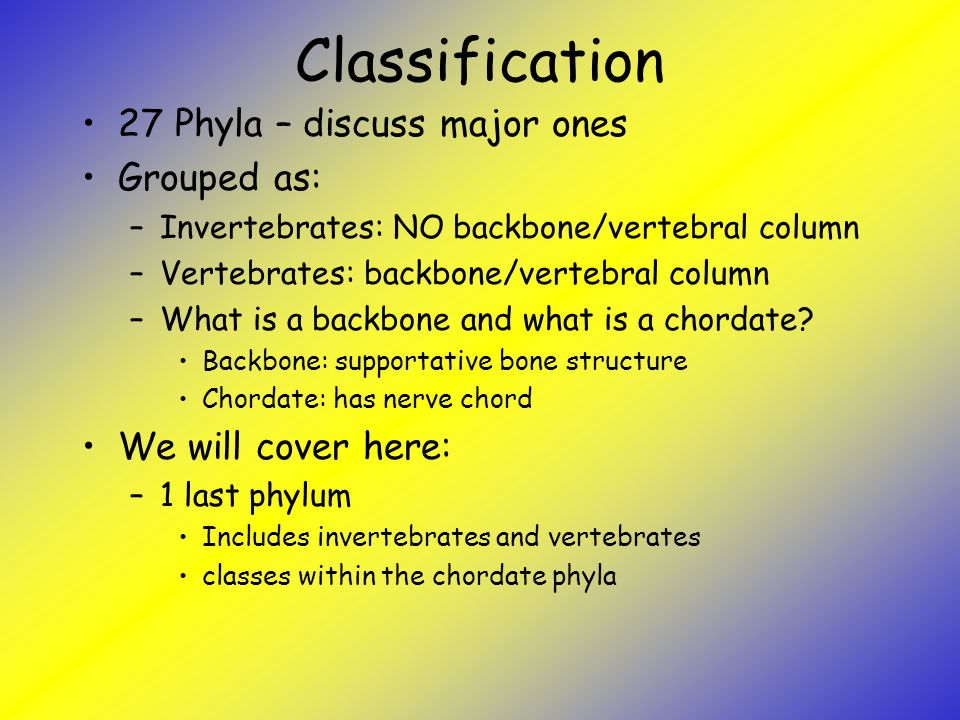 Classification 27 Phyla – discuss major ones Grouped as: