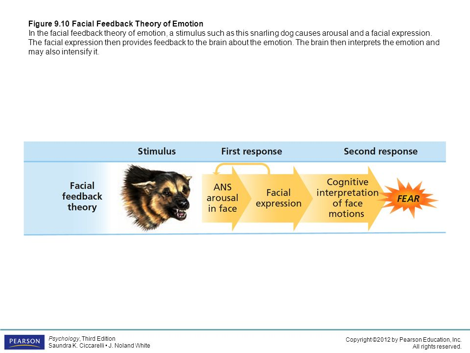 The facial feedback theory