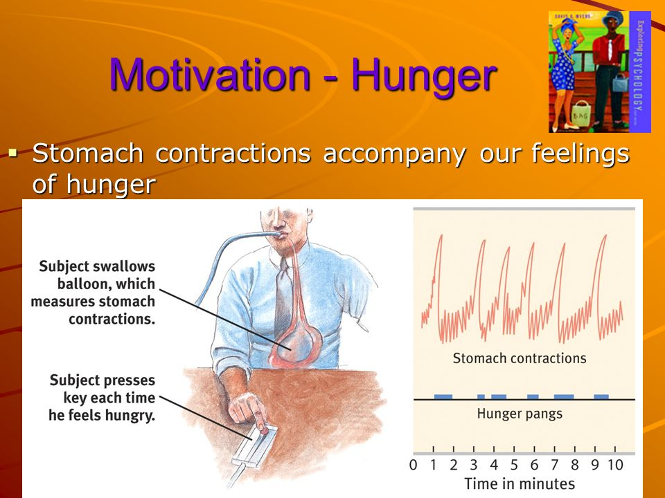 Motivation - Hunger Stomach contractions accompany our feelings of hunger