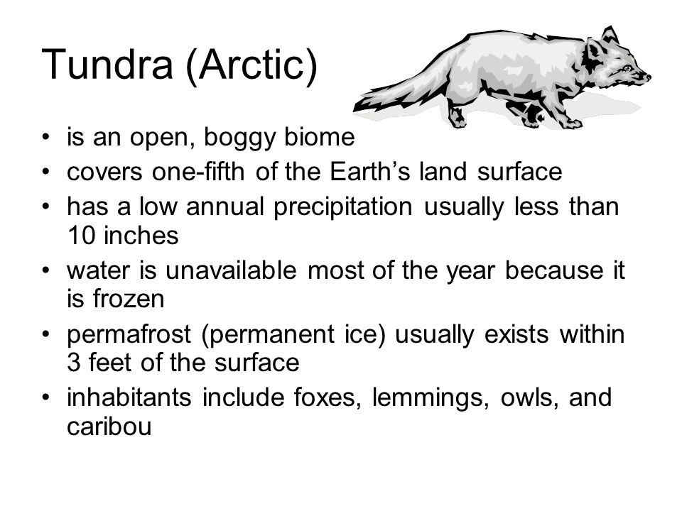 Tundra (Arctic) is an open, boggy biome