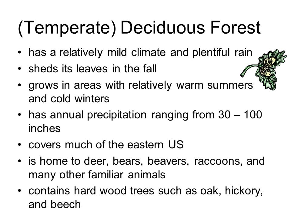 (Temperate) Deciduous Forest