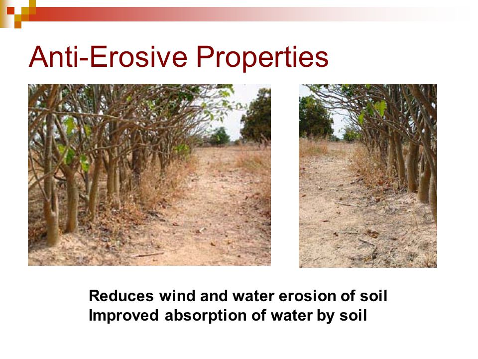 Biodiesel production technology feedstocks for india for Soil erosion in hindi