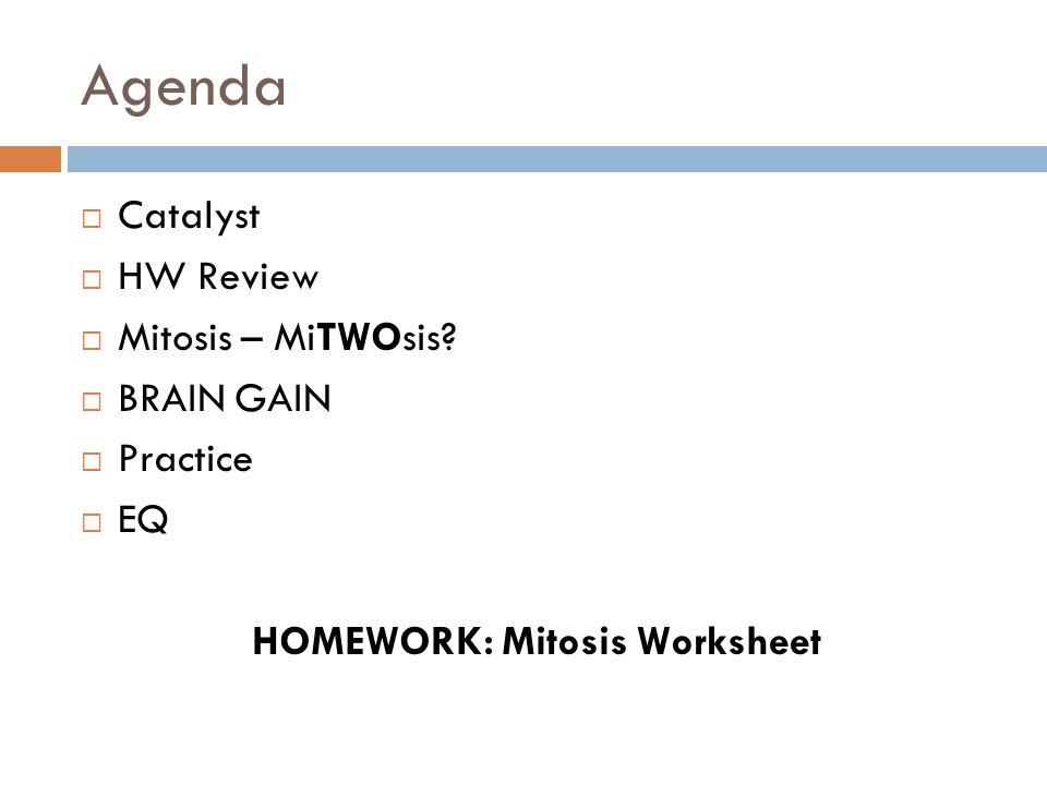 Mitosis Worksheet Key Letravideoclip – Mitosis Worksheet Key