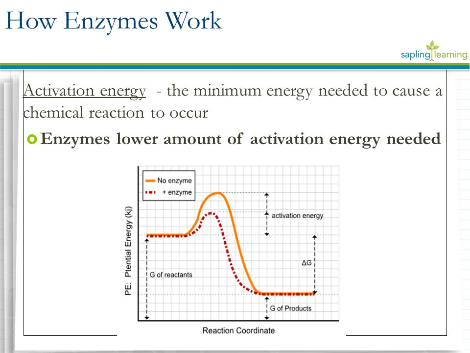 How Enzymes Work Activation energy - the minimum energy needed to cause a chemical reaction to occur.