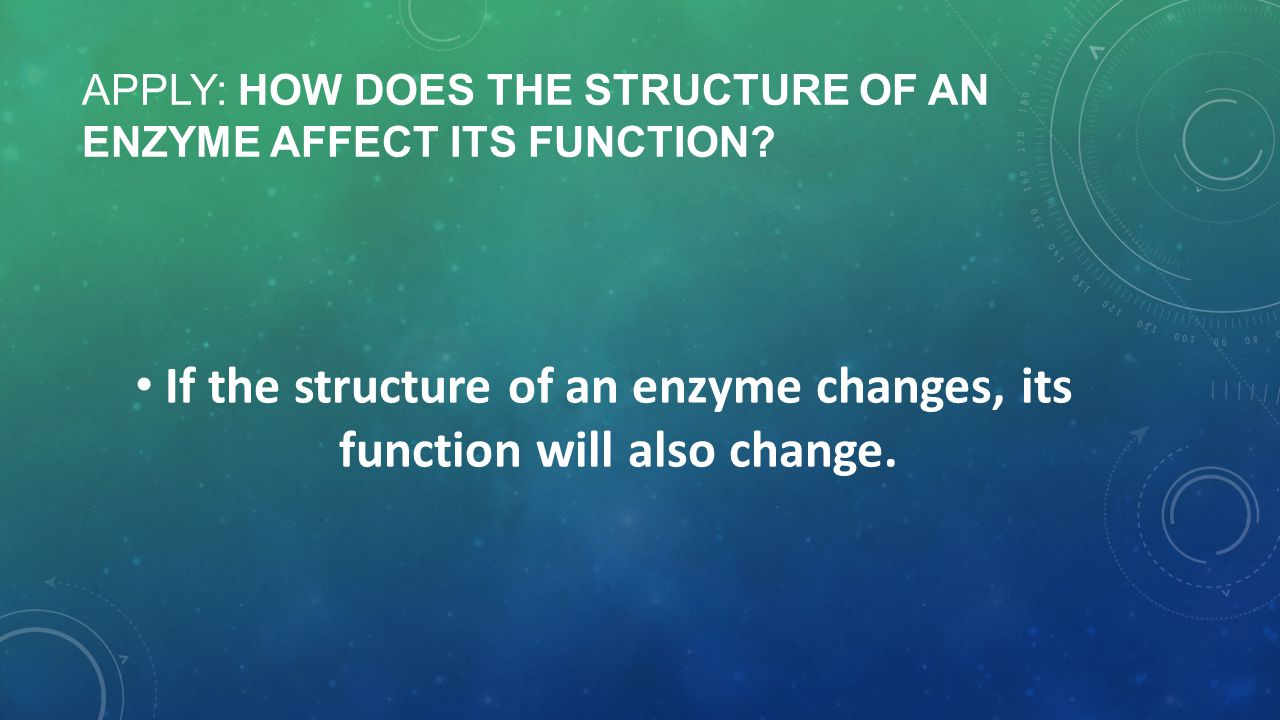 APPLY: How does the structure of an enzyme affect its function