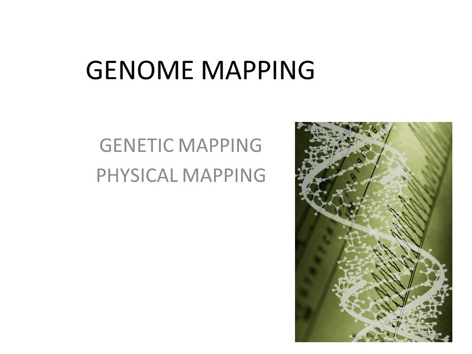 genetic mapping Geneticists use maps to describe the location of a  a gene's molecular address pinpoints the location of  for more information on genetic mapping.