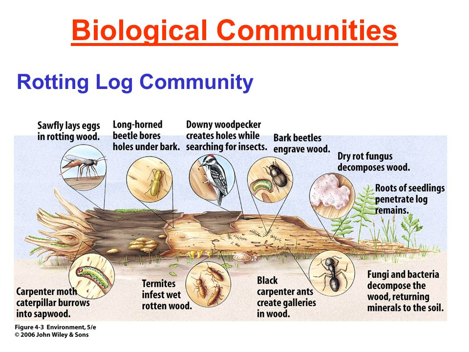 ecosystem and living organisms They also include things that are hidden from our eyes, like organisms living underground and micro-organisms that are too small to i spy an ecosystem author.