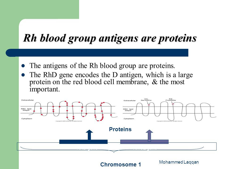 Rh blood group antigens are proteins