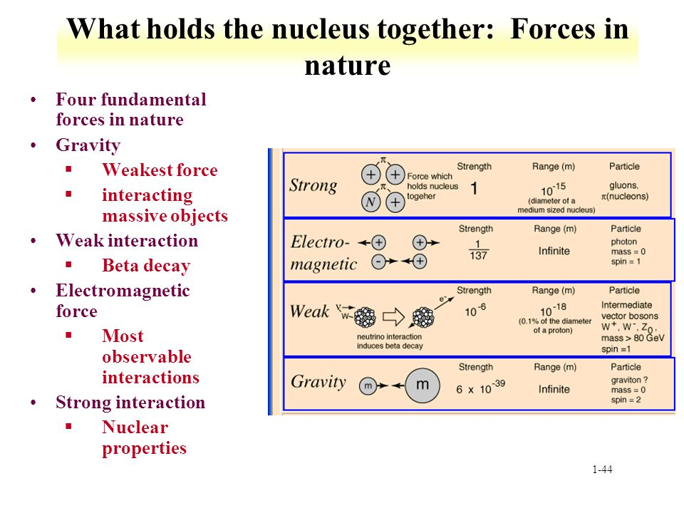 What holds the nucleus together: Forces in nature