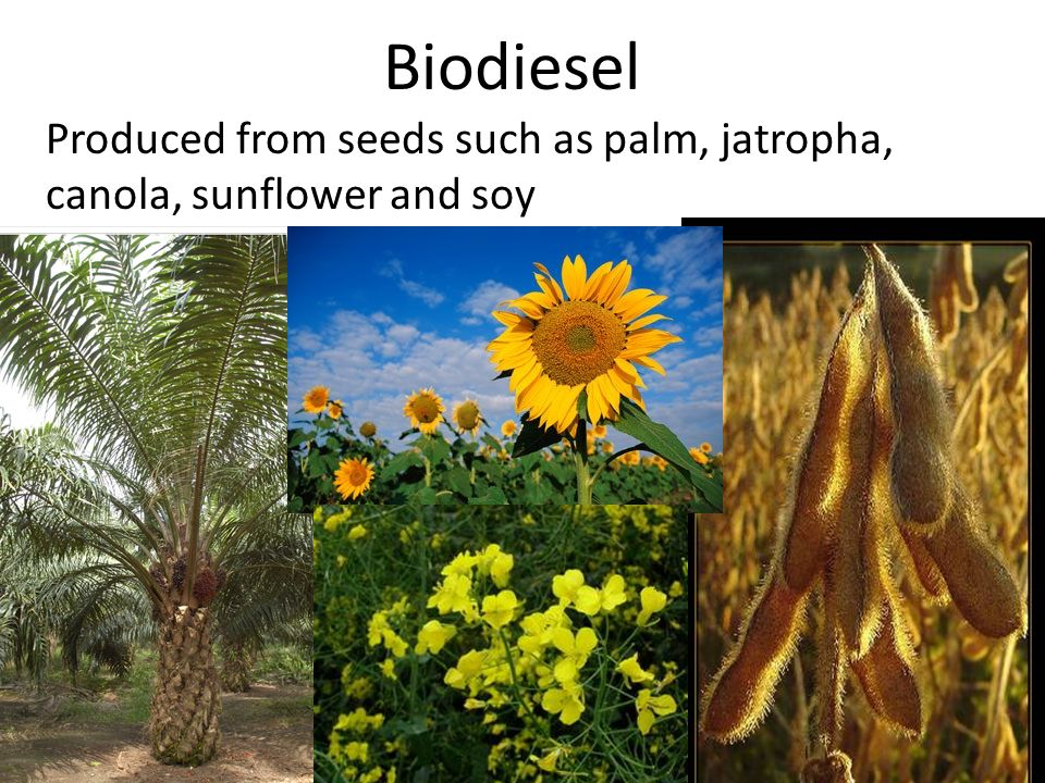 how to make biodiesel from soy