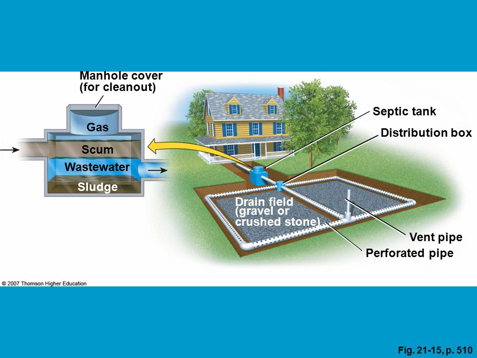 Core case study using nature to purify sewage ppt download for Septic tank fumes in house