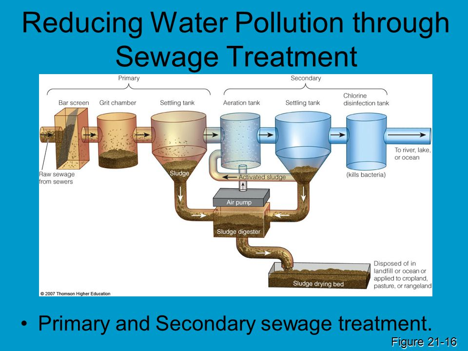 Core Case Study Using Nature To Purify Sewage Ppt Download