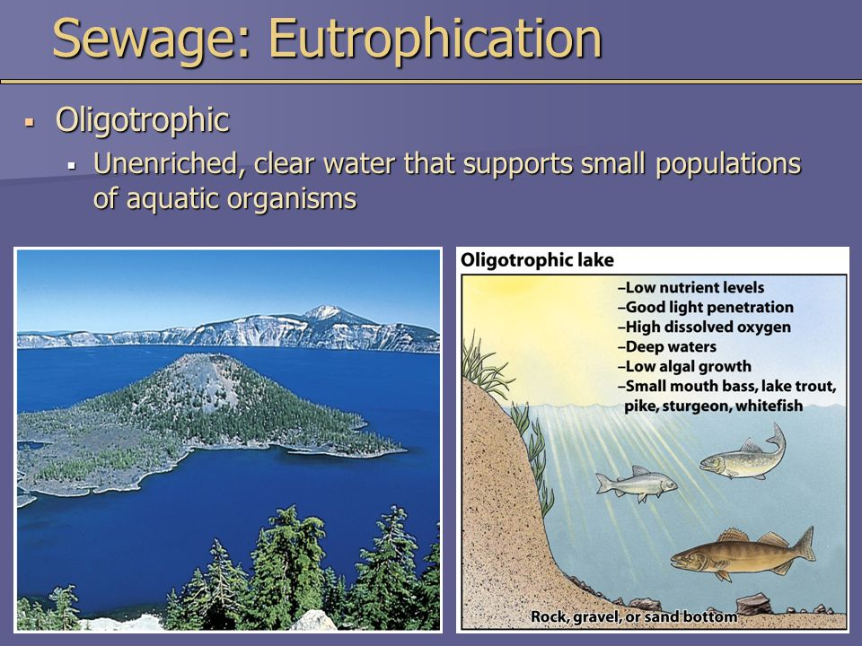 Sewage: Eutrophication