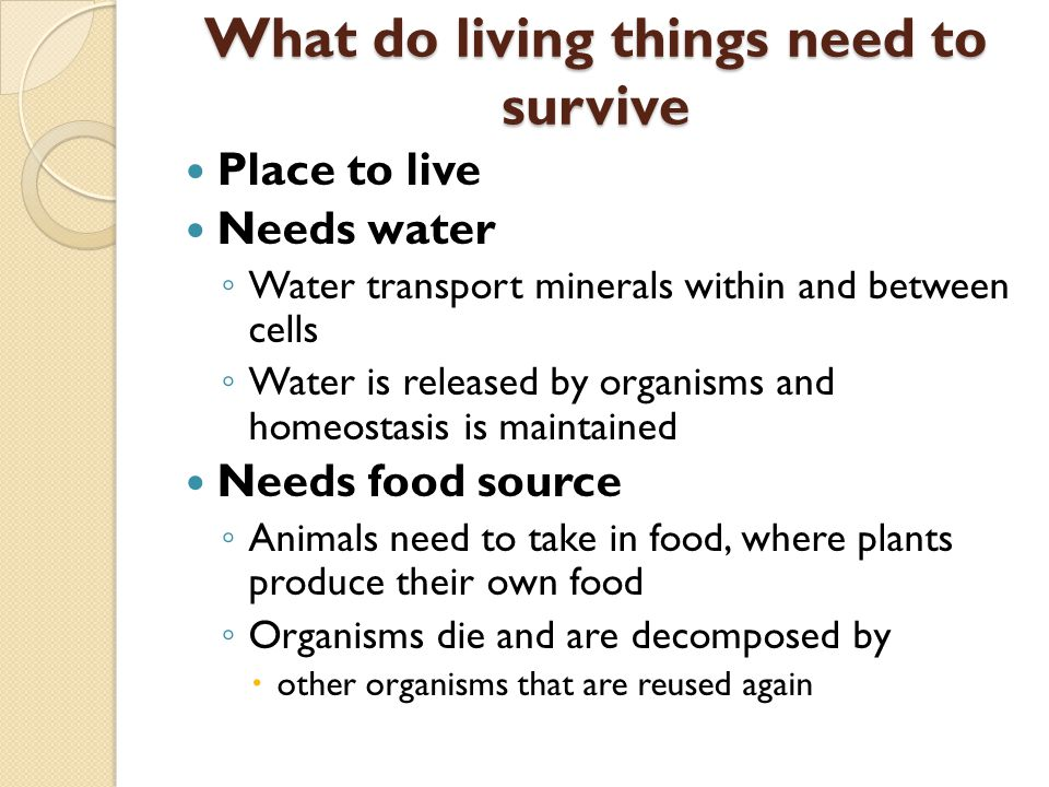 why do living things need energy The only source of outside energy available to our planet is the radiation from the sun--however, some living organisms (such as animals) cannot use the sun directly to produce food and to keep themselves alive.